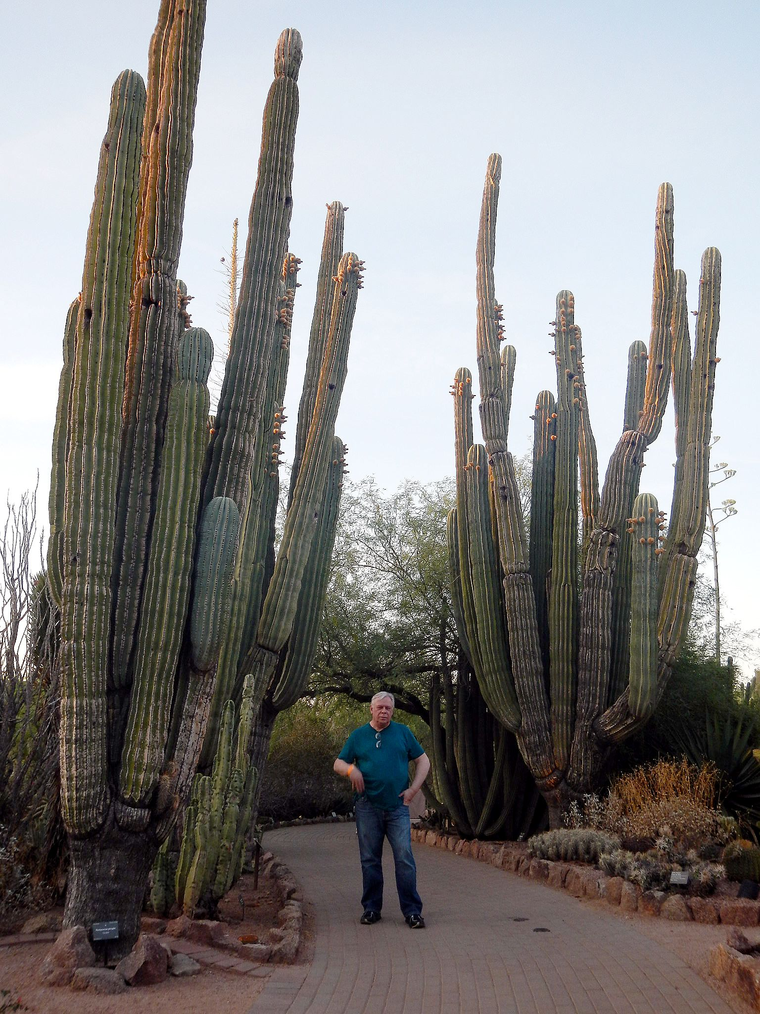 There Cactus Texas Are