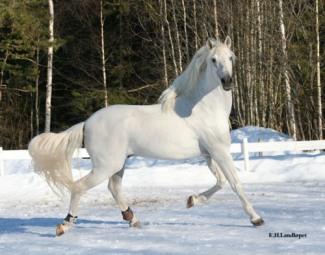 White horse free