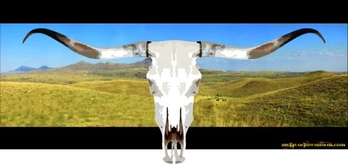 longhorn 4