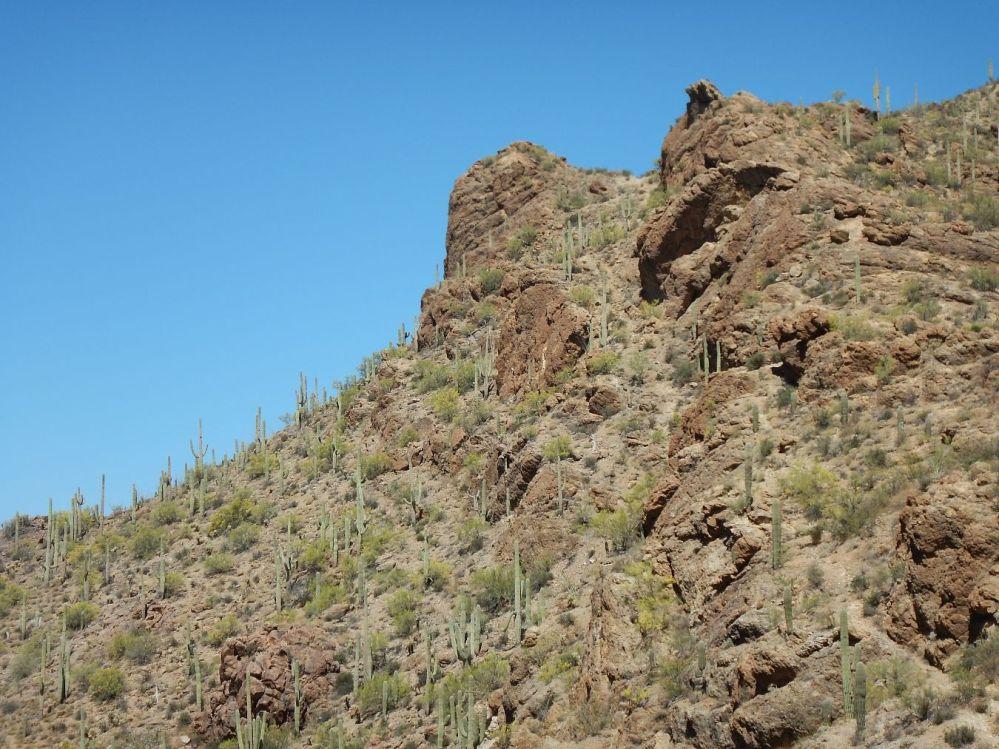 Old Tucson saguaro cactus forest 2
