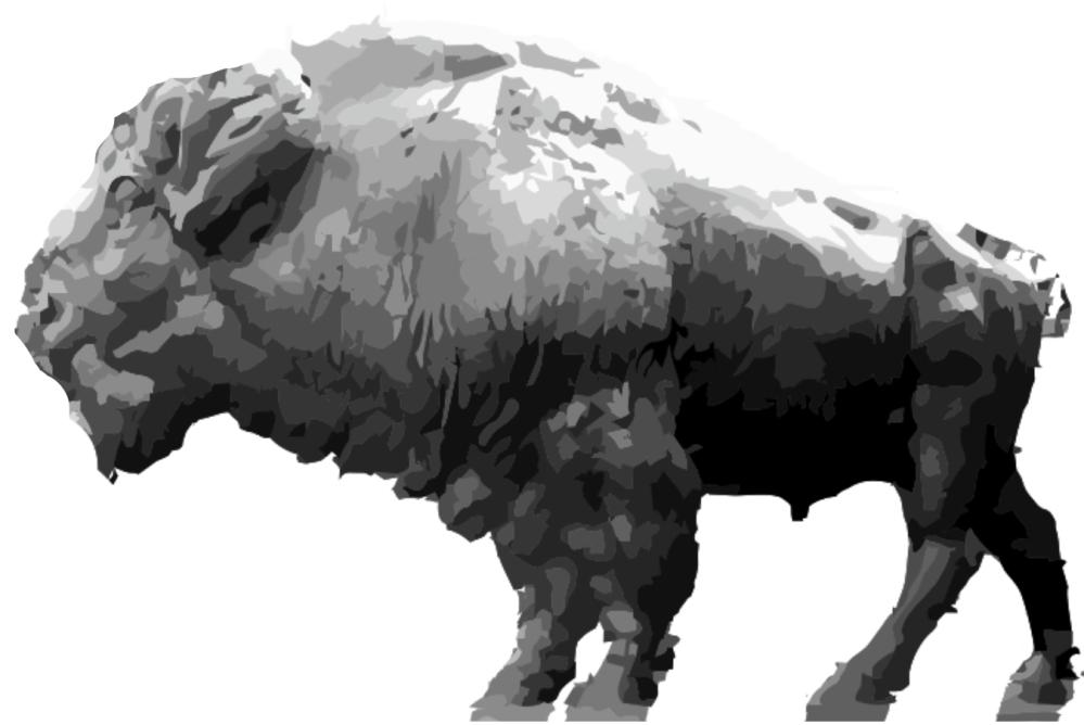 A Man Called Horse buffalo
