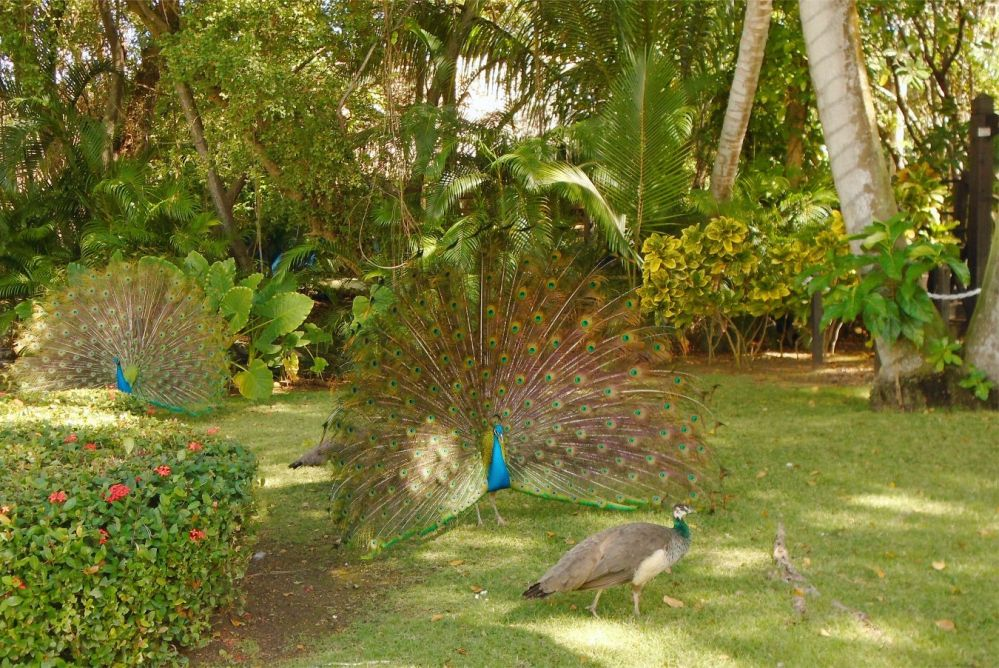 Punta Cana 24