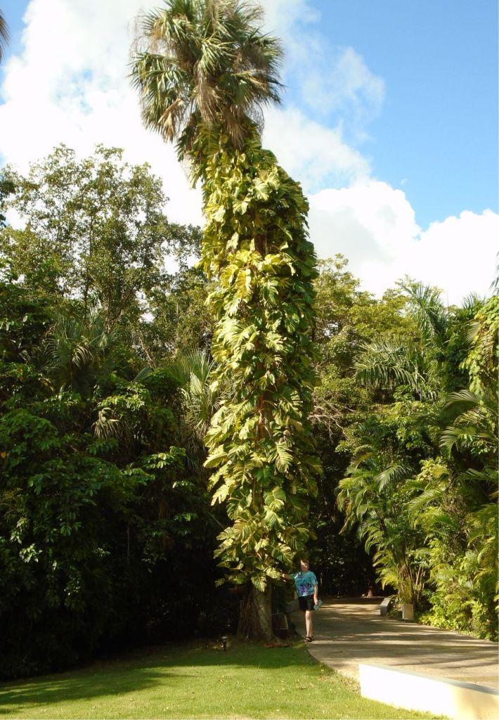 Punta Cana 31