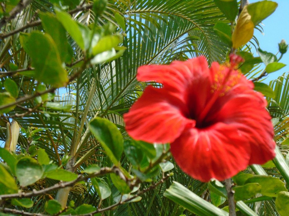 Punta Cana Day 2 11