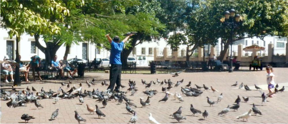 Santo Domingo pigeon maestro