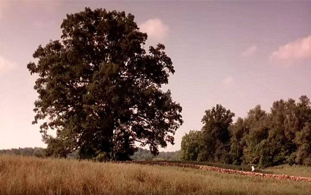 Shawshank 3