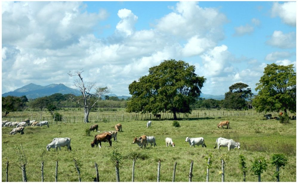 Country Safari 7