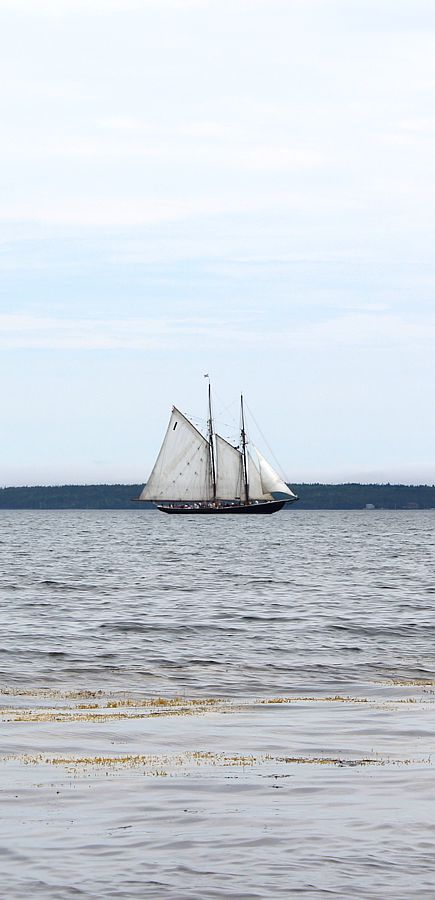 bluenose-in-the-bay