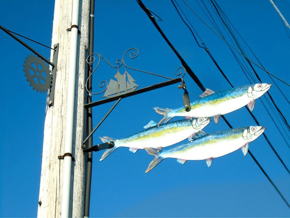 signs-of-fish