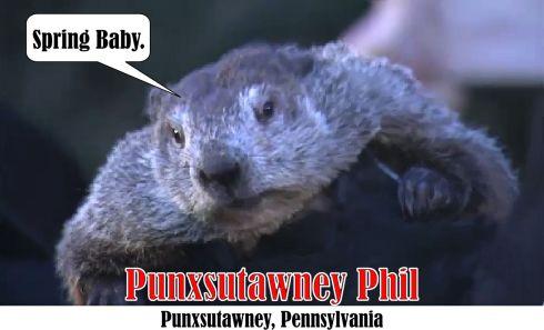 punxsutawney-phil